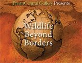 Wildlife Beyond Borders