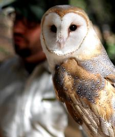 Naturalist with Barn Owl